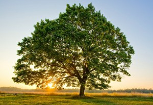 albero delle caldaie
